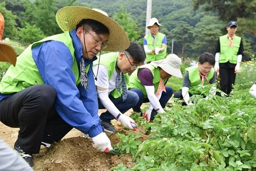 ▲ 이대훈 NH농협은행장(왼쪽)과 임직원들이 의왕시 원터마을에서 농촌일손을 돕고 있다.