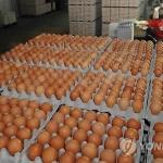 정부, 계란 가격 안정화 총력...다양한 방안 내놔