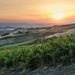 이탈리아의 슈발 블랑 '테누타 디 트리노로'