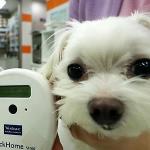 애견 시장 확대에 '강아지 보험' 눈길 돌리는 보험사