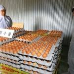 허술한 계란 '난각코드' 관리…7년간 농장 점검 안해