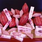 [컨슈머리뷰] 자연에서 온 핑크초콜릿, 킷캣 '수블림 루비'