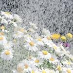 [오늘 날씨] 맑지만 중서부 미세먼지 '나쁨', 일교차 커