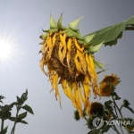 [내일날씨] 낮 최고기온 36도 폭염 계속…밤부터 태풍 '솔릭' 영향권