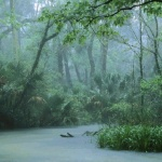 브라질 정부, 아마존 열대우림 지역개발 강행할 듯