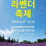 마리오아울렛 허브빌리지, 오는 6월까지 라벤더 축제 개최