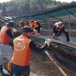 KGC인삼공사, 폭설피해 농가 긴급 복구 지원
