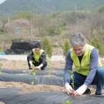 홍재은 NH농협생명 대표, 영농철 농촌 일손돕기 나서