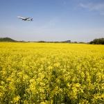 인천공항, 하늘정원 유채꽃밭 3주간 무료 개방