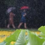 [오늘 날씨] 전국 흐린 가운데 서울 산발적 비 소식