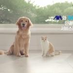 AXA손보, 공유차 전용 보험 홍보 '안전한 카셰어링 캠페인' 전개