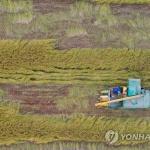 올해 쌀 생산량 39년 만에 '최소'