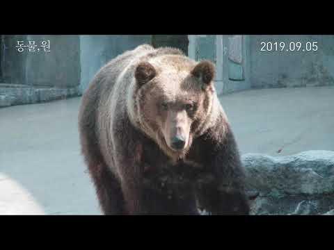 [영상] 영화 '동물, 원', RAINBOW99와 콜라보 뮤직비디오 공개